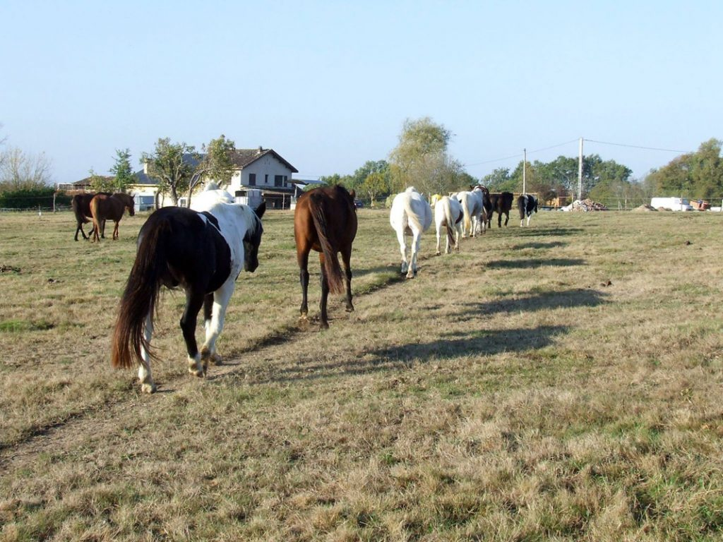 randonnée à cheval à bordeaux