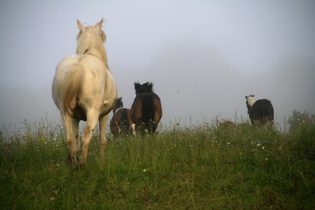rando cheval gironde